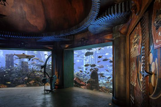 the-lost-chambers-aquarium
