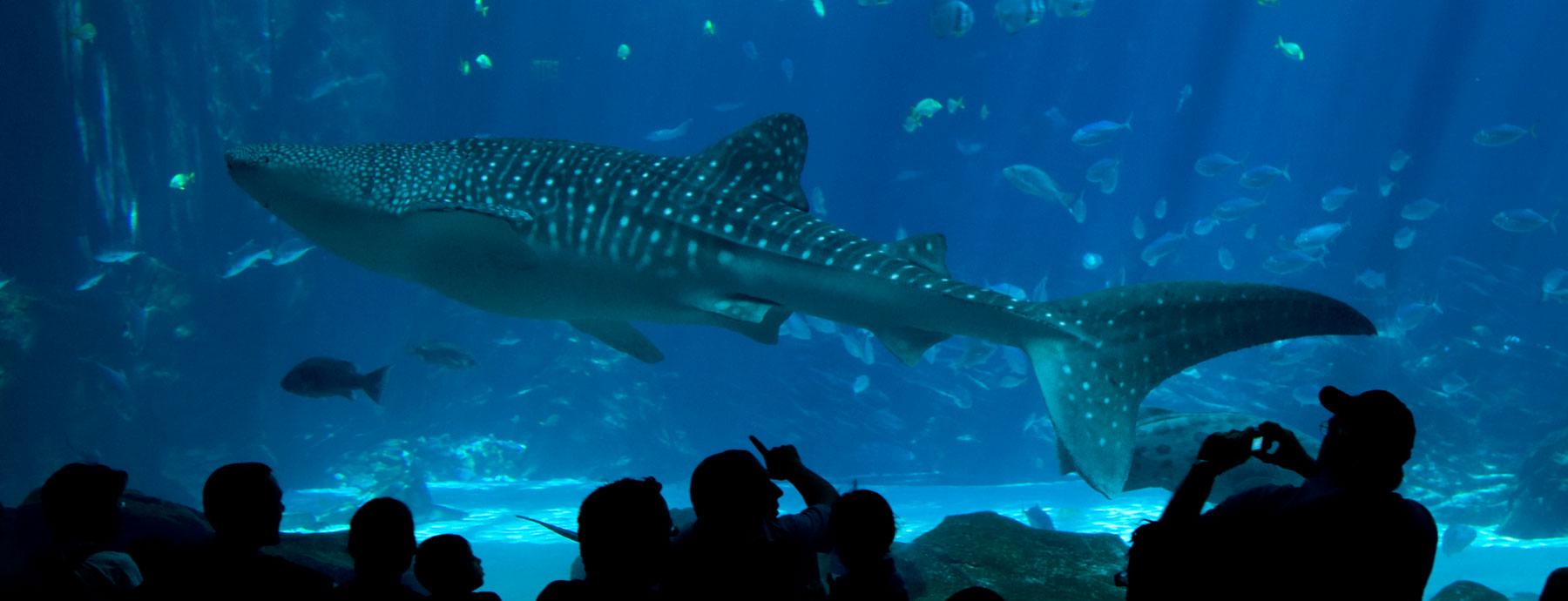 shedd-aquarium-package-at-chicago-hotel-top - مدونة خالد ...