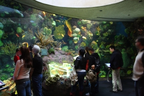 Wild_Reef_at_Shedd_Aquarium,_2009-11-15